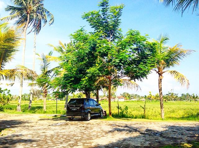 Diary of Ubud: Day One