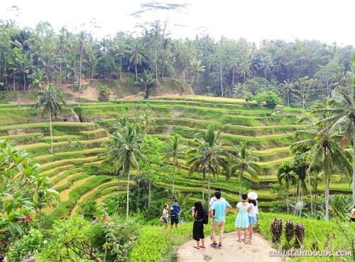 Ubud Bali Photo